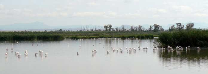 Reserva Natural El Hondo