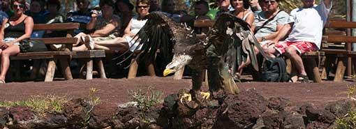 Oasis Park, Aves Rapaces