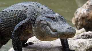 loro parque reptiles